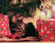 SHOP this Holiday Season & Support the SPCA