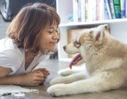 7 Indoor Activities to Keep Your Pet Active This Winter